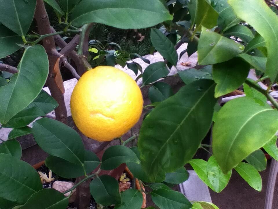 Lemon Butter Sauce  { Salsa di Burro al Limone} All Our Way