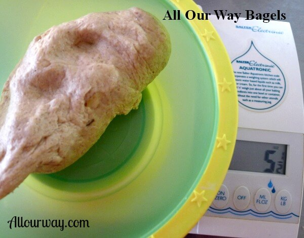 homemade bagels dough in a green and yellow plastic bowl ready to scale, bench, cut, weigh