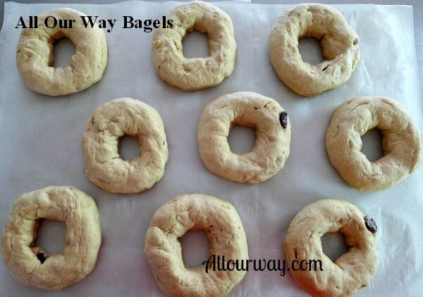 Homemade bagels are on a Baking Sheet Ready to Broil