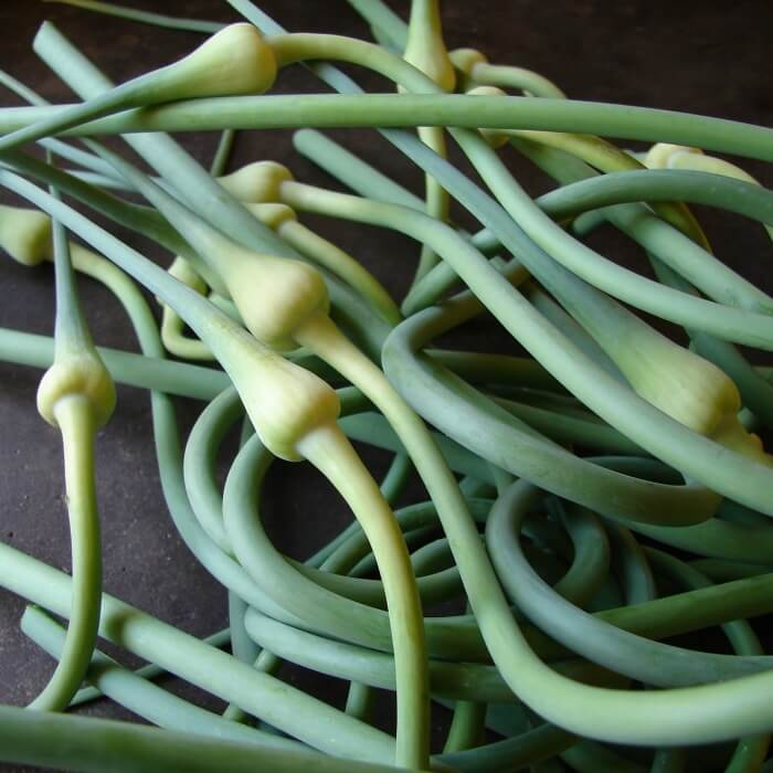 Fresh green garlic scapes on black slate in a pile.