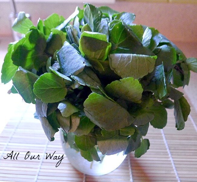 Peppery Watercress Ready for the Pasta Dish @allourway.com