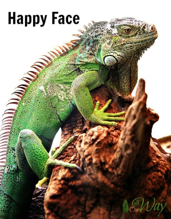 Bubba, our Iguana, with a happy face after eating his kale @allourway.com