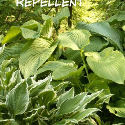 Win the Battle With The Deer – Natural Deer Repellent