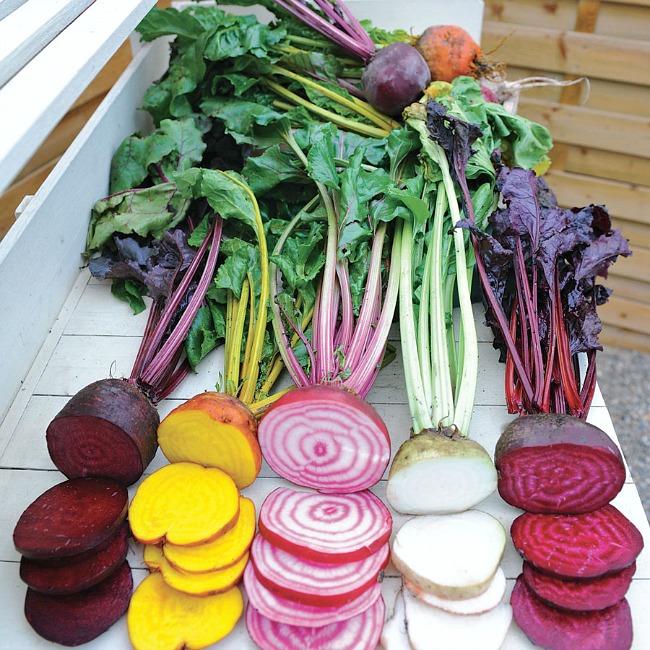 Unbeatable Beet Salad with Hickory Bacon Vinaigrette - four beet varieties @allourway.com