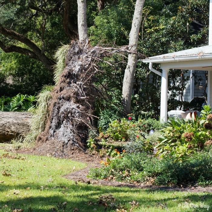 Life after a hurricane shows the power of the storm. @allourway.com