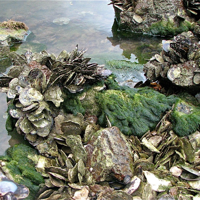 Oysters Rockefeller Italian Style oyster bed @allourway.com