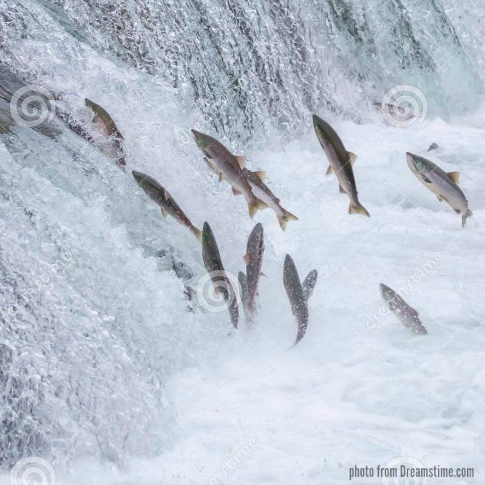 Wild caught salmon for Grilled Italian Pesto Salmon in 30 minutes start to finish @allourway.com