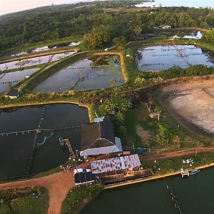 Overhead view of a shrimp farm. with different square reservoirs for the shrimp. Farm raised shrimp vs. wild caught
