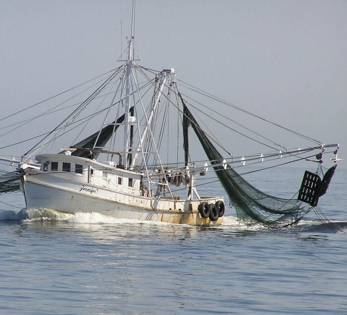 Shrimpers going for wild-caught shrimp @allourway.com