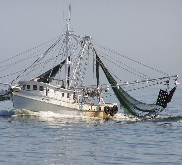 Shrimpers going for wild-caught shrimp @allourway.com